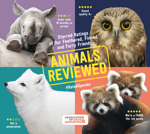 Animals Reviewed, Red Panda, Owl, Rhino, Snow Fox, Adorable, Animals