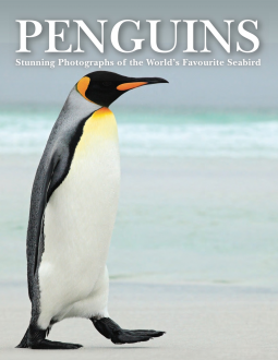 Penguins, Tom Jackson, Penguins, Photography, Cute, Adorable, Non-Fiction